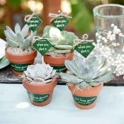 succulent wedding favors | weddinggawker